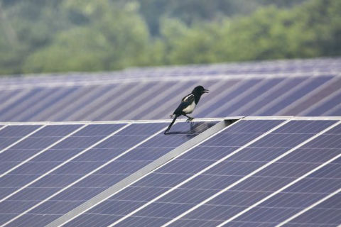 Hormel Food Plant Adds Solar Panel Installation to Offset 15% of Electricity