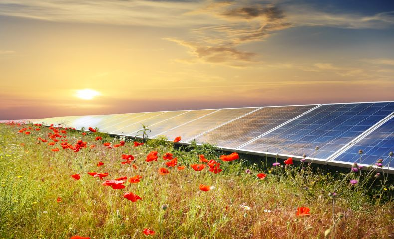 Solar Power Is Blooming · HahaSmart